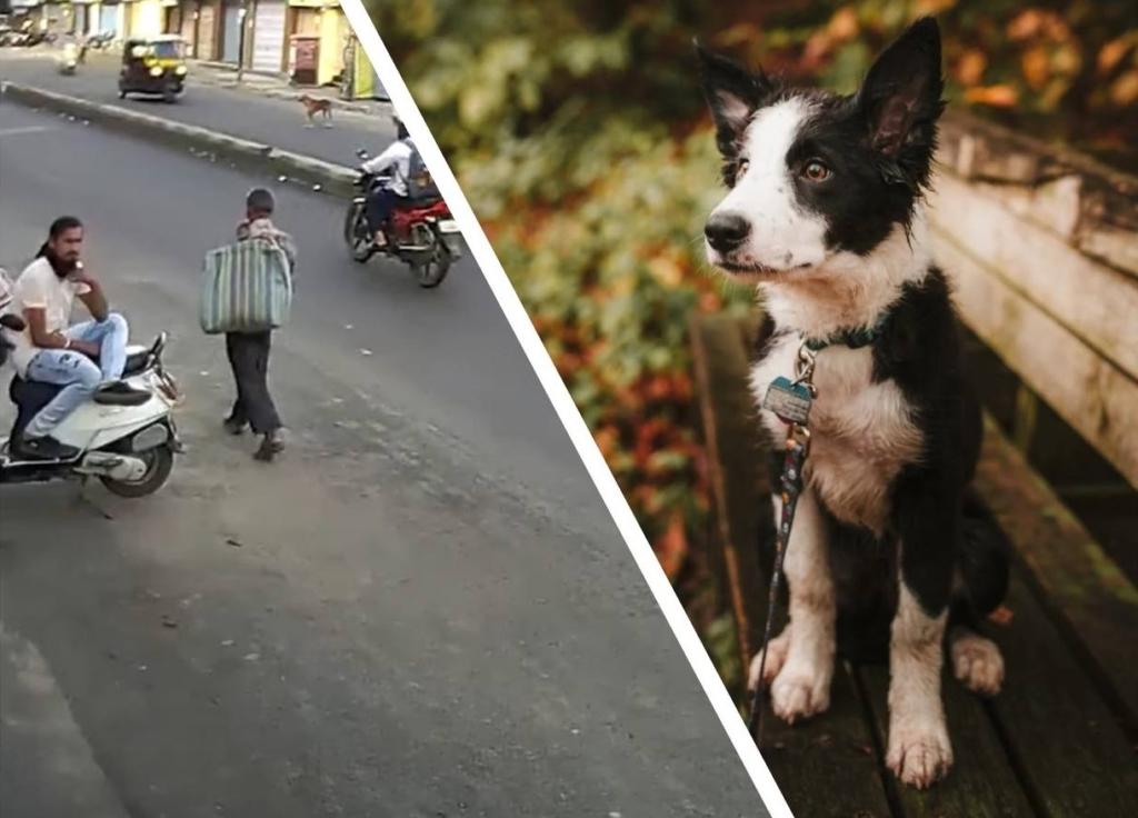 Этот индус хотел ударить собаку на улице, но карма оказалась гораздо быстрее Разное,карма,собака