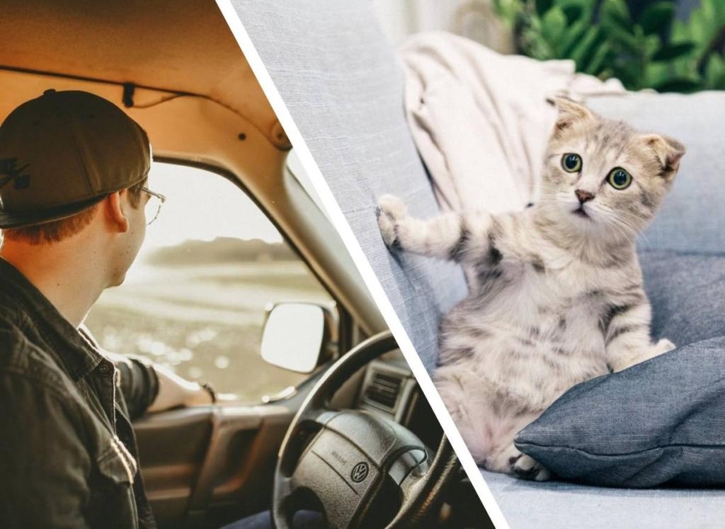 Парень нашел на дороге котенка, и забрал его с собой, но вскоре понял, этот «сюрприз» совсем другой зверёк