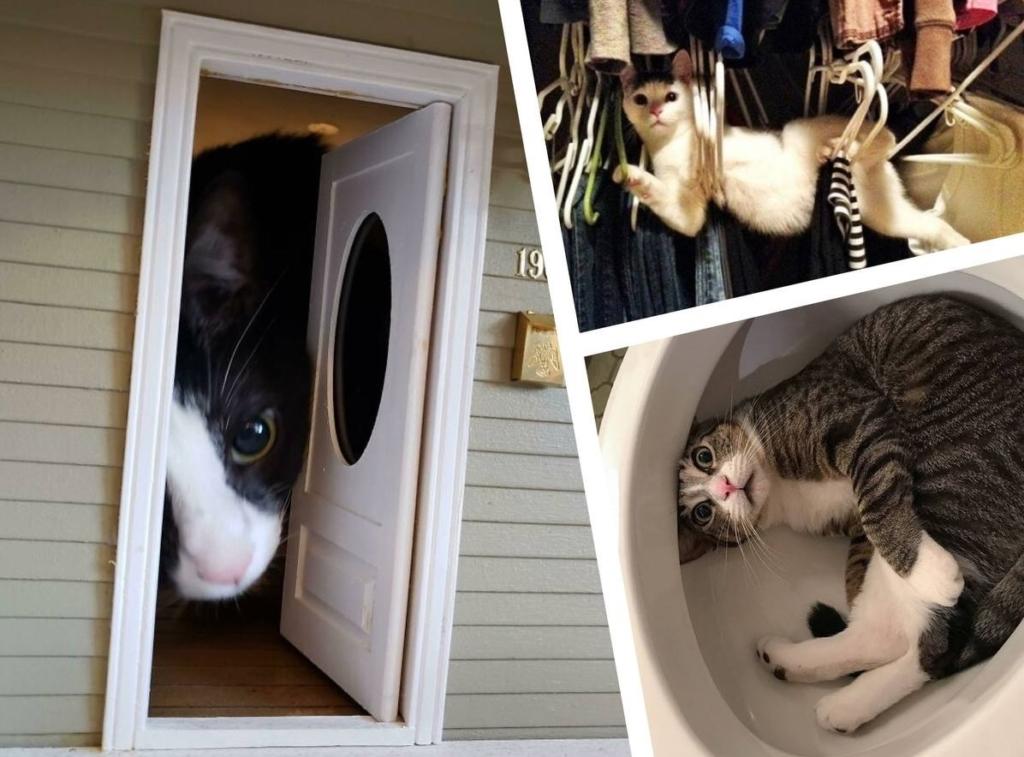 15+ неожиданных моментов из жизни кота, когда его поймали в неловком положении и это вызывает только смех