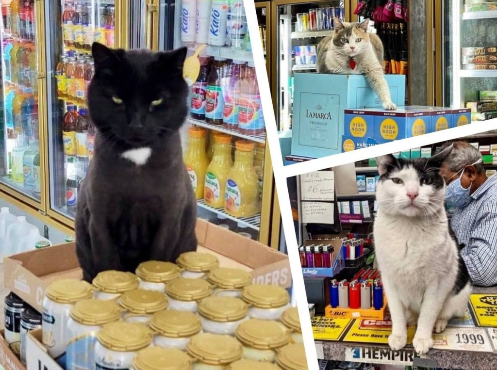 10+дерзких котов, для которых магазин как дом родной, где они чувствует себя хозяевами Природа,кот,магазин