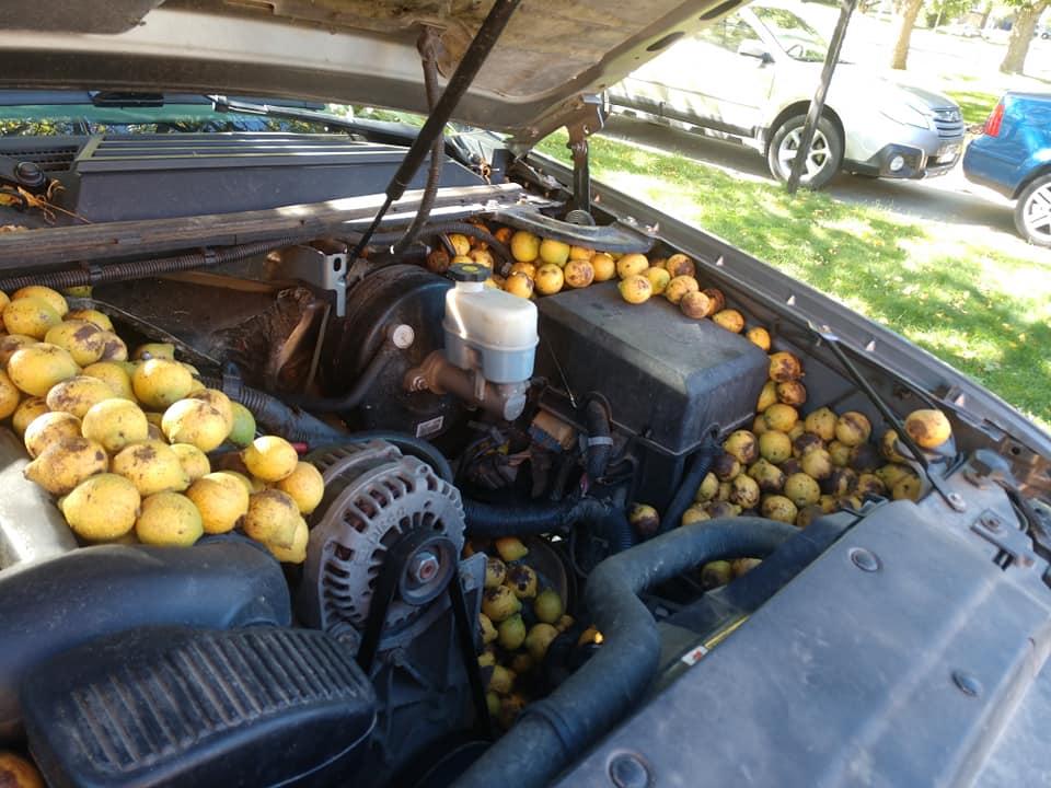 Мужчина оставил машину на улице на пару дней и пожалел об этом, ведь  когда он вернулся, «местные жители» оставили ему под капотом сюрприз на 70 кг Природа,авто,белка