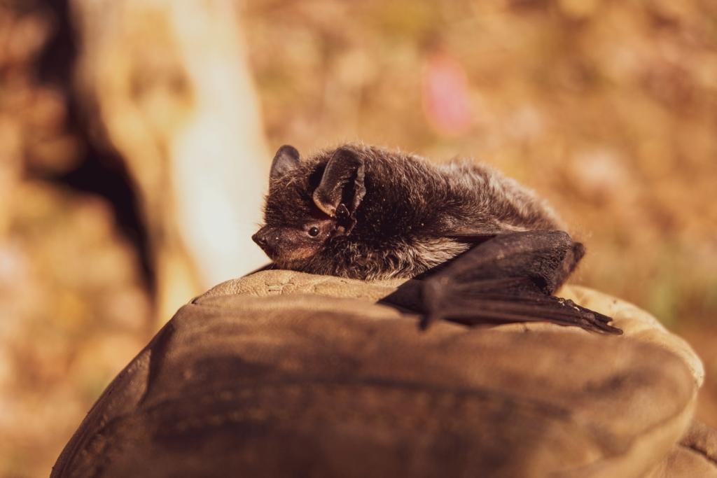 Мужчина проснулся от того, что его укусило за шею маленькое животное, но не обратил внимание, а через месяц скончался Разное,Человек,мышь,укус