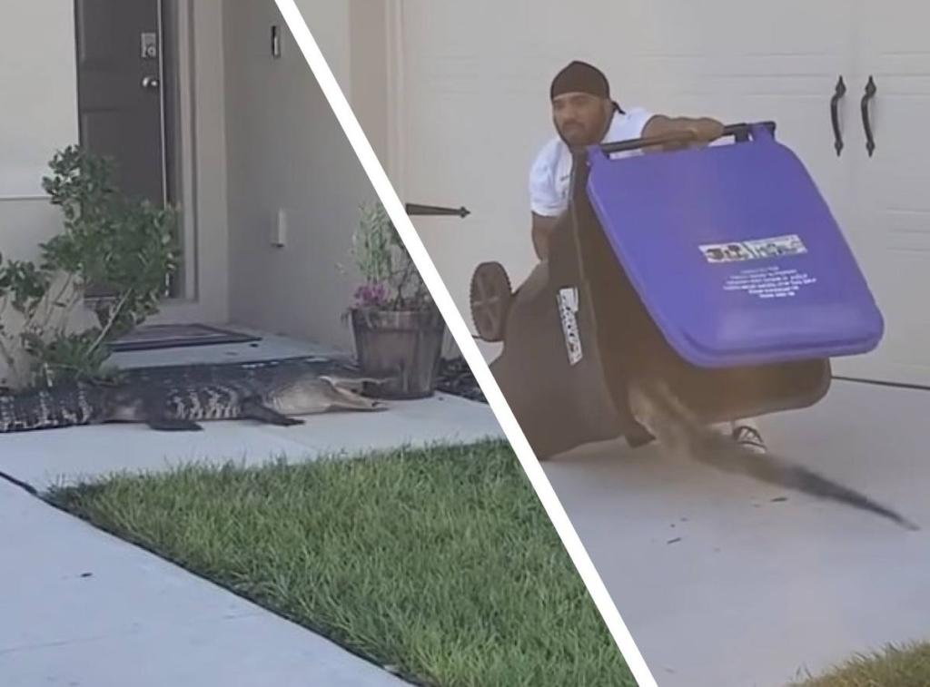 Парень из США в одиночку смог поймать аллигатора в мусорный контейнер и спас соседа, став героем дня