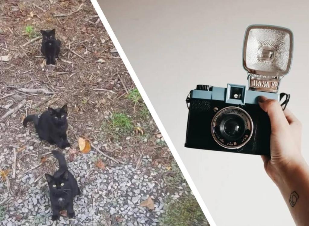 В сети не могут подсчитать котиков: на фото все видят только троих, но их четыре