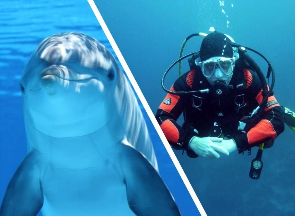 Дельфин попросил помощи у дайверов, ведь с ним приключилась беда, а после поблагодарил спасателей